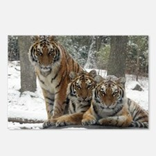 TIGER IN THE SNOW Postcards (Package of 8)