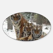 TIGER IN THE SNOW Decal