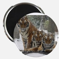 TIGER IN THE SNOW Magnets