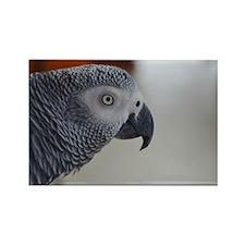 Congo African Grey Parrot Rectangle Magnet