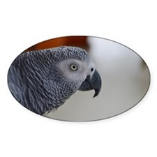 Congo African Grey Parrot Decal