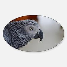 Congo African Grey Parrot Decal