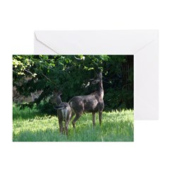 Deer Eating the Apple Trees Cards (pkg6)