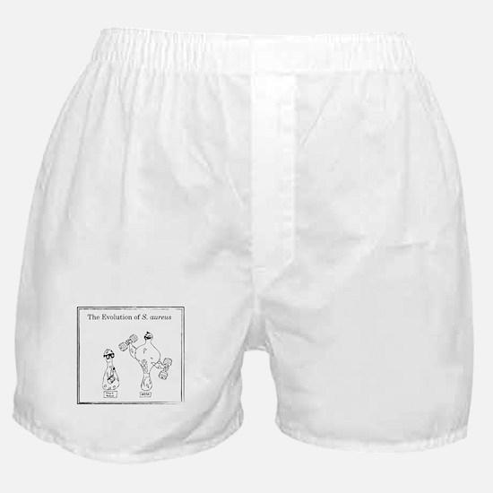 The Evolution of Staph aureus Boxer Shorts
