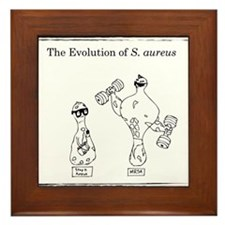 The Evolution of Staph aureus Framed Tile