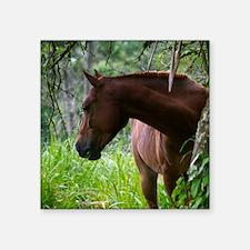 Costa Rica horse Sticker