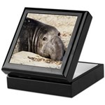 Northern Elephant Seal Keepsake Box