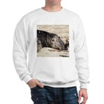 Northern Elephant Seal Sweatshirt