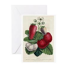 BotanicalStrawberry Greeting Card