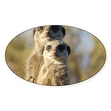 Meerkat Decal