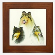 Rough Collie Heads Framed Tile