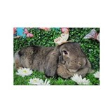 Brown tick lop rabbit Magnets