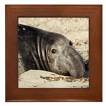 Northern Elephant Seal Framed Tile