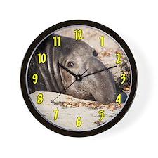 Northern Elephant Seal Wall Clock