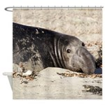 Northern Elephant Seal Shower Curtain