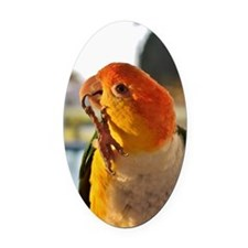White Bellied Caique Parrot Thinki Oval Car Magnet