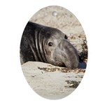 Northern Elephant Seal Ornament (Oval) Ornament (O