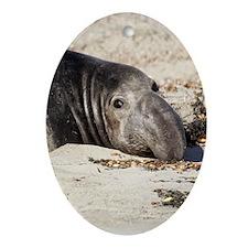 Northern Elephant Seal Ornament (Oval) Ornament (O