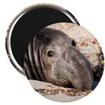 Northern Elephant Seal Magnets