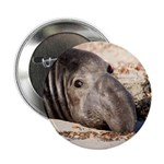 Northern Elephant Seal 2.25