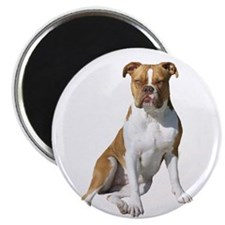 Am Bulldog 2 (Brn-W) Magnet