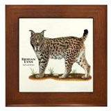 Iberian lynx Framed Tiles