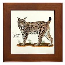Iberian Lynx Framed Tile