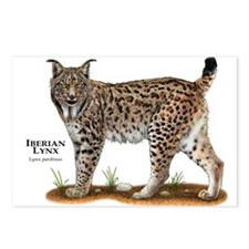 Iberian Lynx Postcards (Package of 8)