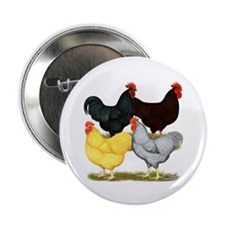"Heavy Breeds Rooster Quartet 2.25"" Button"