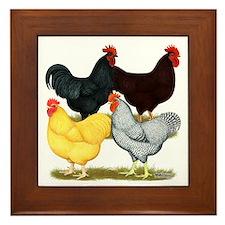 Heavy Breeds Rooster Quartet Framed Tile