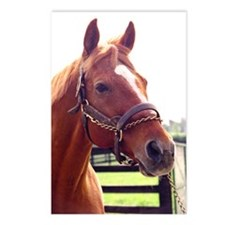 AFFIRMED -Photo2_Right side.jpg Postcards (Package