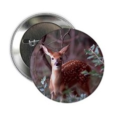 "Whitetail Deer 2.25"" Button (100 pack)"