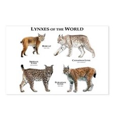 Lynxes of the World Postcards (Package of 8)