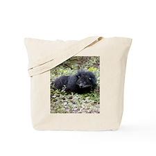 Bearcat Binturong Tote Bag