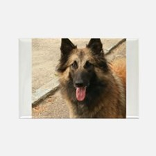 Belgian Shepherd Dog (Tervuren) Magnets