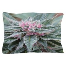 Pink Love Pillow Case