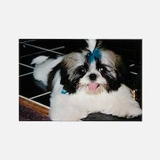 Shih-Tzu Puppy Rectangle Magnet