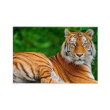 tiger Rectangle Magnet