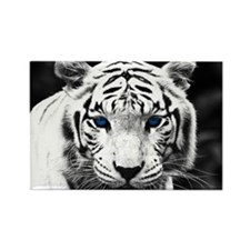 White Tiger Blue Eye Rectangle Magnet