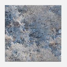 SnowBeauty Tile Coaster