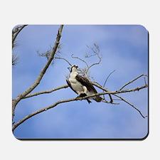 Osprey Enjoying Lunch Mousepad