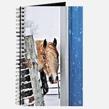 Unique Appaloosa Journal