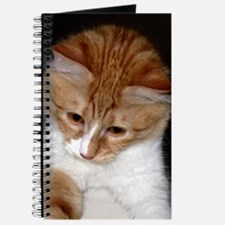 Cute Kitty Looking Journal