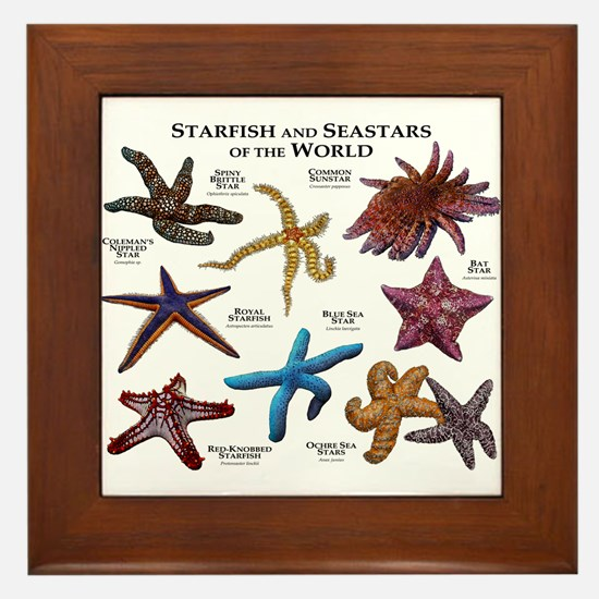 Starfish & Seastars of the World Framed Tile