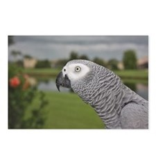African Grey Parrot lake  Postcards (Package of 8)