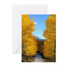 Aspens changing Greeting Cards