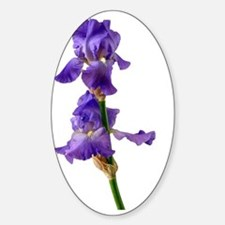 The beautiful Iris Sticker (Oval)