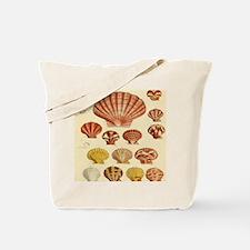 Beach Seashell Artwork Tote Bag