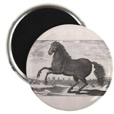Alexander the Great's Horse Bucephalus Magnet
