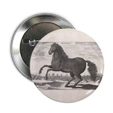 "Alexander the Great's Horse Bucephalu 2.25"" Button"
